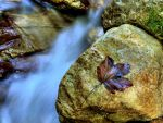 Autumn River IV by mutrus