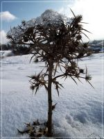 Spiky Winter by Rely