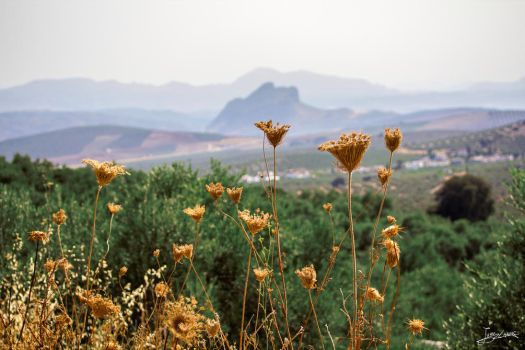flores ante el indio - flowers facing the indian by JuanChaves