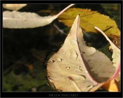 The Leaf That Cried by brandon-mat