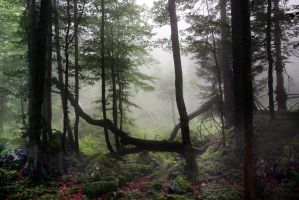 Misty Woods Premade by Dreamworks-STOCK