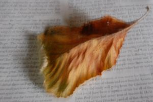 LeafReading.1220 (2) by lifeforceinsoul