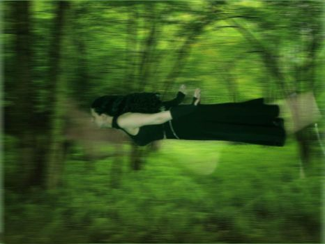 a fly into the forest by kirio