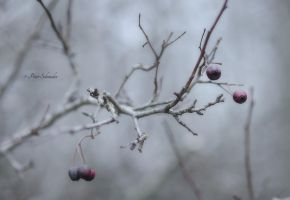 December...wayside (II). by Phototubby