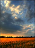 Cloudy Sunset on Wheat - I by Joe-Tony