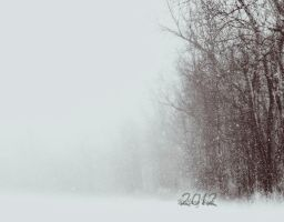 White Out in the Woods by Babybeek