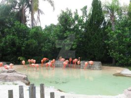 Flamingo Flock by CelticStrm-Stock (27) by CelticStrm-Stock
