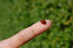 The ladybird who refused to le by xXIcigoXx