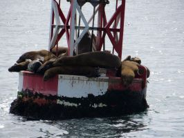Sea Lions by Evevilly