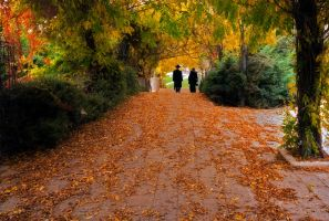 Autumn in Jerusalem by DaniBabitz