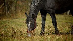 Horse by canaris1780