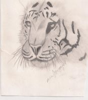 Tiger Sketch by reggy66
