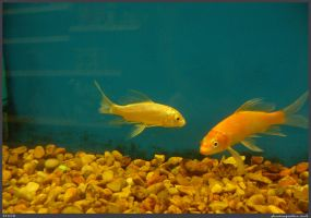 Fish Stock 0032 by phantompanther-stock