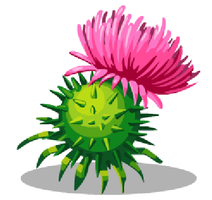Cotton Thistle by Amelia411
