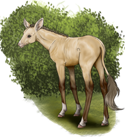 Alize | Filly | Herd member - Lesser royal by decors