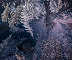 Frost On Window II by JoniNiemela