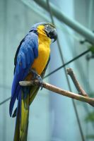 Macaw by harbinger-stock