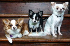 Mia, Oliver and Cleo-02 by RF-Kennels