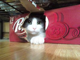 its my cat in a box... by AStein35