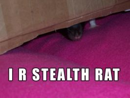 I R Stealth Rat by LOL-Cat