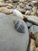 .-:Lonely Little Shell:-. by BlindedByLovexXx