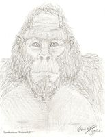 Old Gorilla by Spudnuts
