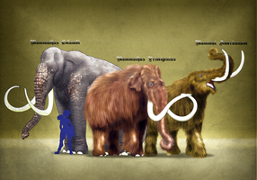 Free Commission Sample: The American Proboscideans by vcubestudios