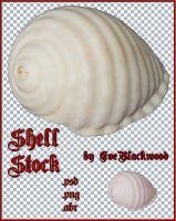 shell_brush_and_image by EveBlackwood