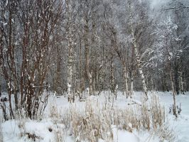 Winter forest 614 by MASYON