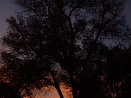 Colorado Sunsets Through Trees 1 by ShadowcatPrime