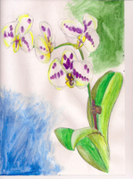 orchids perfect for paintings. by Utaleasha
