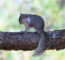 Squirrel with an Itch by Tailgun2009