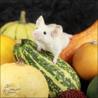 DFM Rainbow III - Mid Show Mouse by BanzZaii