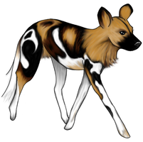 African Wild Dog, Color by piperlee