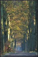 March walk on beech-tree lane by jchanders