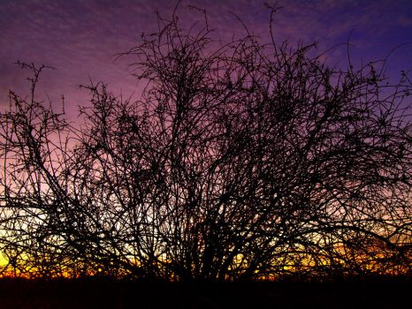 silhouette by Swanee3