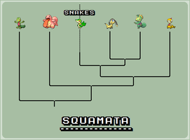 Squamata tree by pepon99