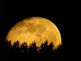 moon behind forest by photonensauger