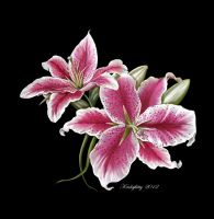 Star Gazer Lillies by karlajkitty