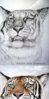 Tiger - before~after by artaquilus