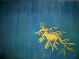 Leafy Sea Dragon by the-jabber-wocky