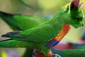 Parrot and cat mix. by caiodiniz1