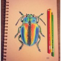 Colorful Beetle by VinceOkerman