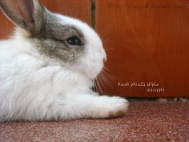 cute Rabbit by dianapple