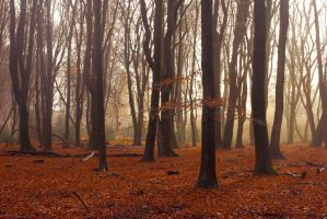 Dancing trees by Pamba