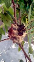 Baby Humming Birds by Heart4Skies