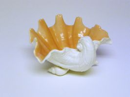Shell Dish Stock13 by D-is-for-Duck
