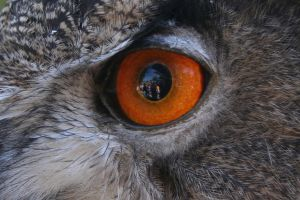 Look into my eye: Cropped by greenwalled1