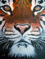 Tiger on Canvas by dx
