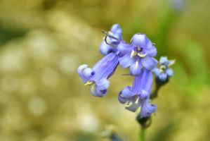 Pretty Flowers by i4Photography